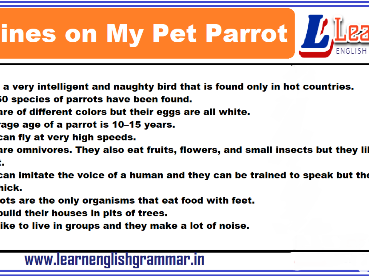 10 Lines On My Pet Parrot Paragraph In English Learnenglishgrammar In